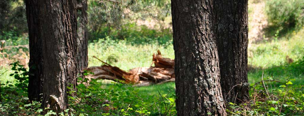 Sintala Design, muebles y casas de madera sin cortar árboles